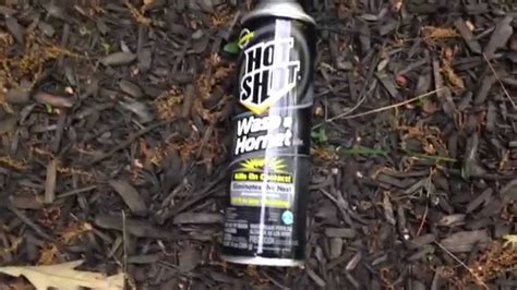 Sprei Honey Bee how to kill a bee hive nest with spray and also get