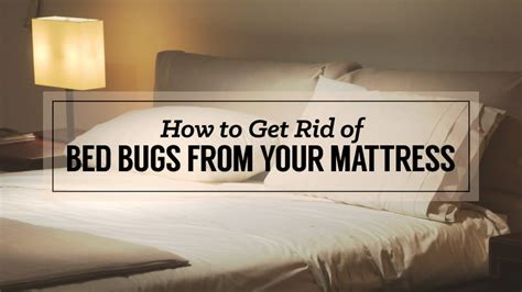 how do you get bed bugs in your bed how to get rid of bed bugs from your mattress