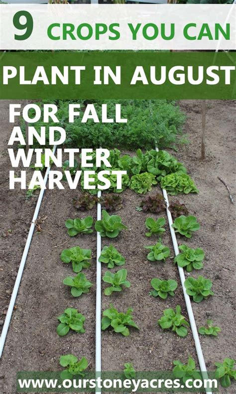 9 crops you can plant in august for fall and winter