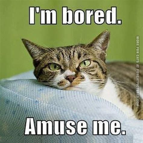 10 Funniest Cat Photos by Amuse Archives Cat Pictures