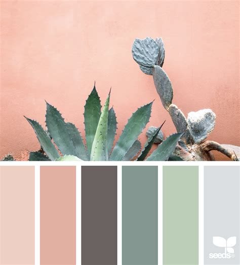 seeds color cacti color design seeds