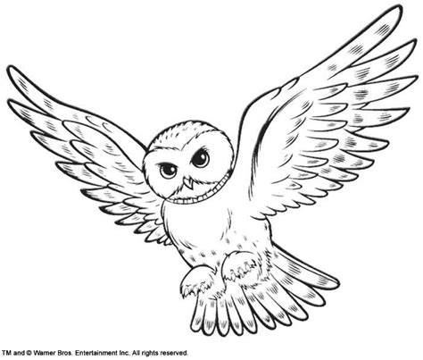 harry potter hedwig owl coloring pages