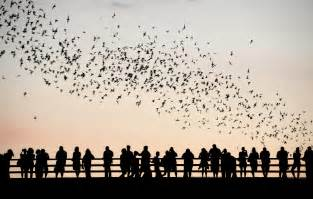 Bats In Tx 3 Places You Need To Checkout In