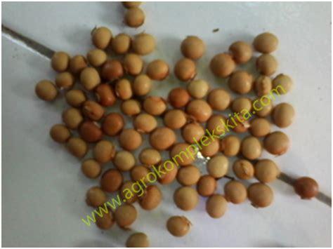 Biji Mrica pembibitan kecipir agrokompleks mmc