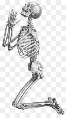 Human skeleton Radius Prayer Ulna - Skeleton skeleton