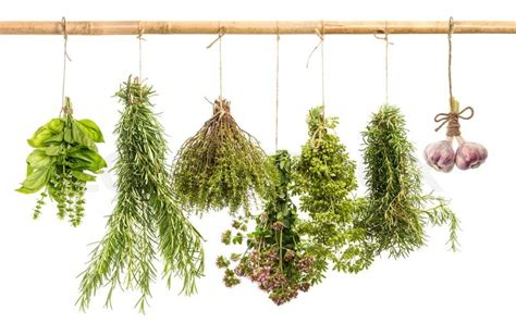 hanging herbs hanging bunches of fresh spicy herbs isolated on white