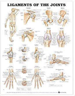 joint layout directed ligaments of the joints anatomical chart 9781587794667