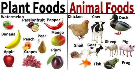 Food Animal akanesi tamaki primary school food from plants