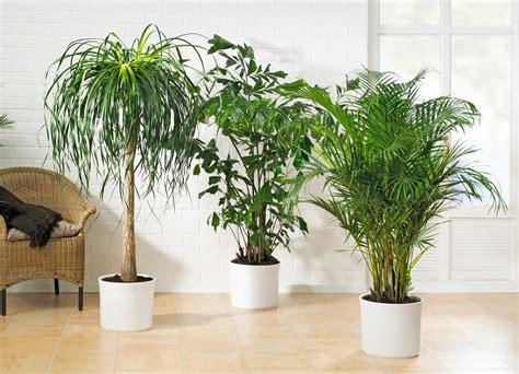 Pflanzen Fürs Fensterbrett by Grose Wohnzimmer Pflanzen Kreative Bilder F 252 R Zu Hause