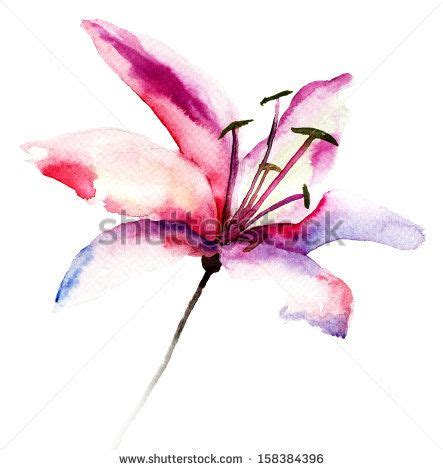 beautiful lily flowers watercolor illustration by regina