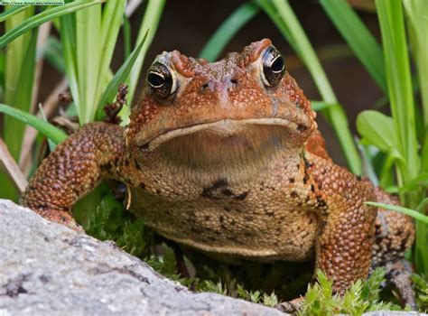 bajar imagenes asquerosas fotos de ranas y sapos i