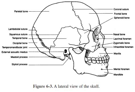 anatomy coloring pages skull discover and save creative ideas
