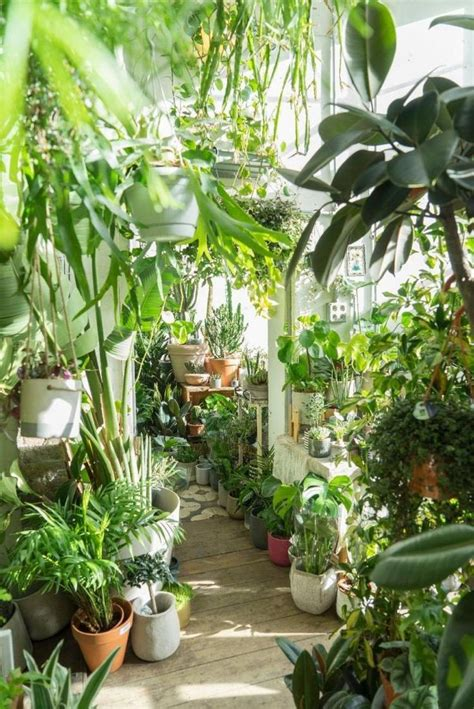 awesome home indoor jungle design ideas indoor