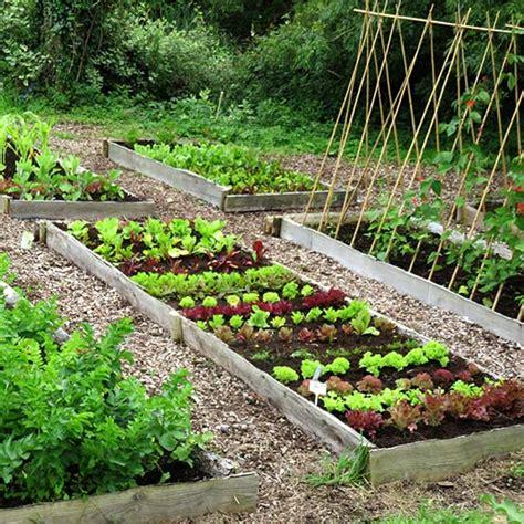 instant large vegetable garden    stress