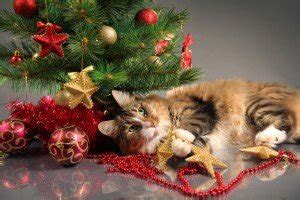 best to keep cats off the xmas tree cattime the place for all things feline