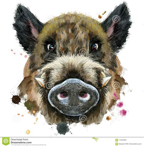 wild boar cartoons illustrations vector stock images