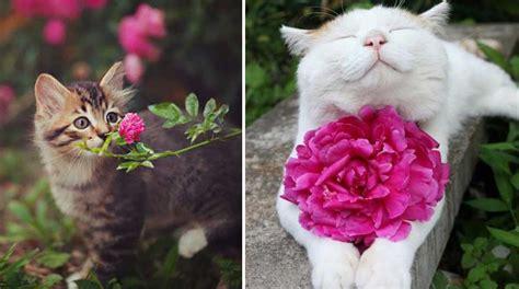 imagenes de flores que parecen animales estos 20 animales oliendo flores son una de las cosas m 225 s
