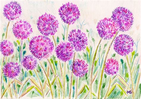 how to draw a garden with flowers allium garden flower print colored pencil ink drawing