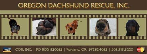 oregon rescue oregon dachshund rescue rescue more