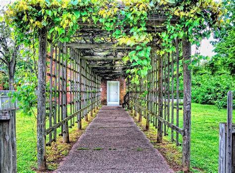 grape arbor rustic grape arbor verdant