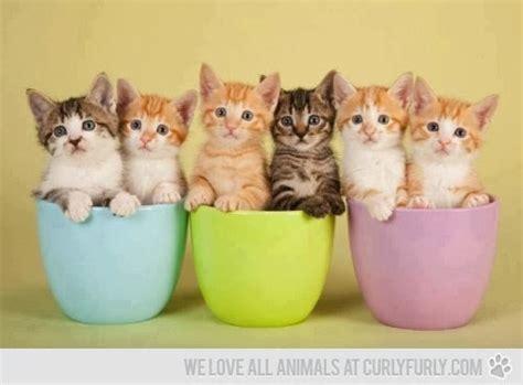 makanan rumah untuk anak kucing rakyat untuk anak quot dzikir kucing quot anak paud