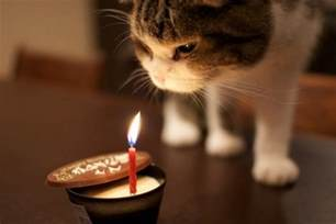 the 105 happy birthday cat birthday wishes for cats