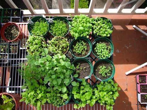 balkongarten anlegen gemusegarten auf dem balkon gem 252 segarten anlegen