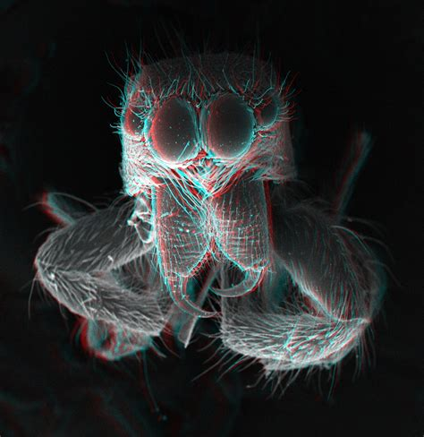 File Jumping Spider Fang 3d Jpg Wikimedia Commons 3d Spider