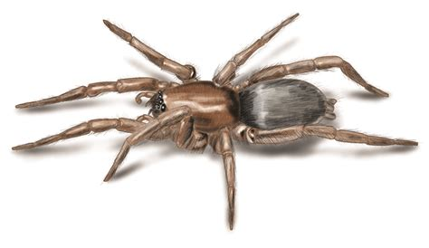 spider images spider pictures photos images of various spider species