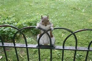 animale vanitoso scoiattolo vanitoso viaggi vacanze e turismo turisti