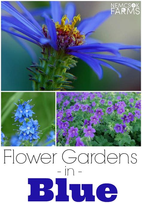 Beautiful Blue Flowers For Your Yard And Garden Nemcsok Blue Flowers For Garden