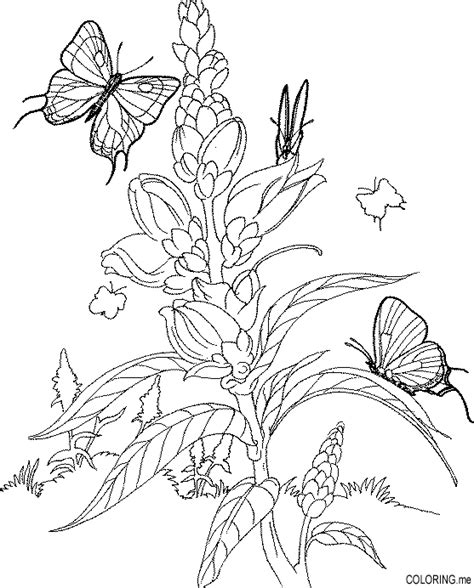 free coloring pages of butterfly flower