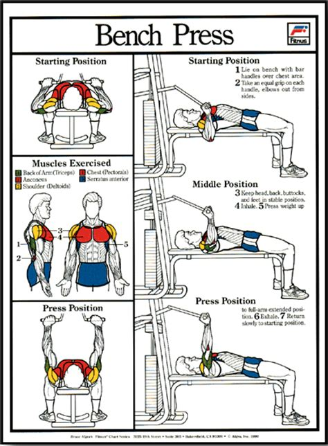 bench press for size bench press machine poster clinical charts and supplies