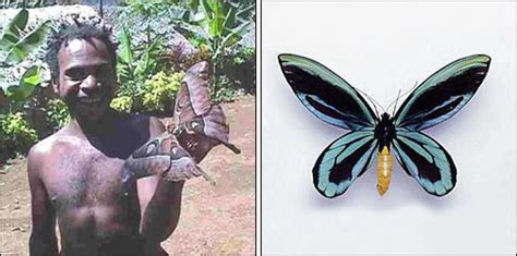 imagenes de mariposas negras grandes insectos gusanos moluscos y dem 225 s bichos gigantes el