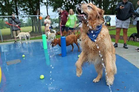 park for dogs january 2014 kilcona park club