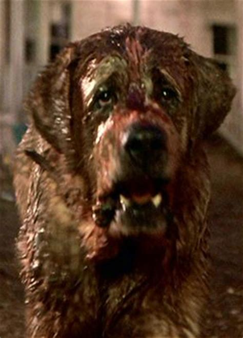 what of was cujo cujo celluloid