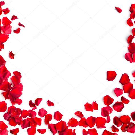 imagenes rojas de fondo p 233 talos de rosas rojas sobre fondo blanco foto de stock