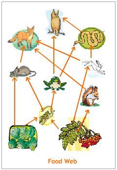 food web trophic levels food web explained with