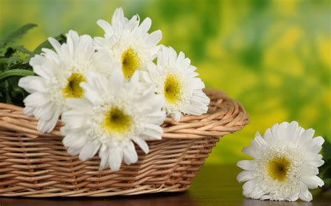 fiori wallpaper flowers basket wallpapers hd pictures one hd wallpaper