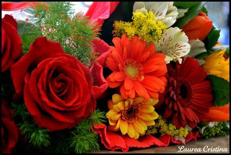 mazzolino di fiori mazzolino di fiori foto immagini piante fiori e funghi