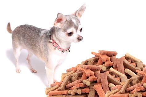 chihuahua alimentazione chihuahua cani taglia mini scopri il chihuahua