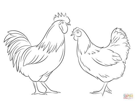 coloring book pictures rooster hen drawings outline google search rooster hen