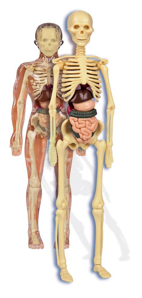 el cuerpo el cuerpo pictures to pin on pinsdaddy