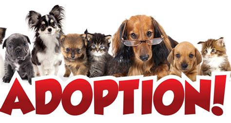 Blood Considers Adoption 2 by Reasons To Consider Pet Adoption Tally Ho Publishing