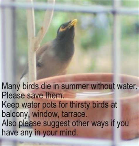 save them many birds die in summer without water save