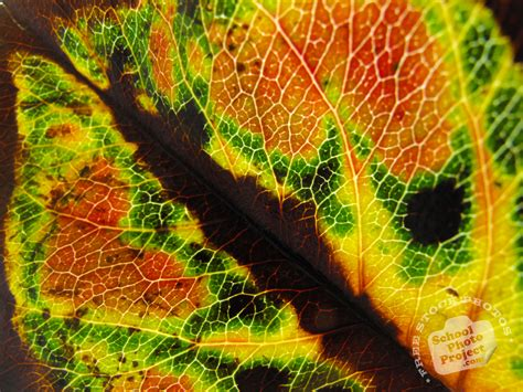 leaves pattern photography leaf vein free stock photo image picture autumn leaf