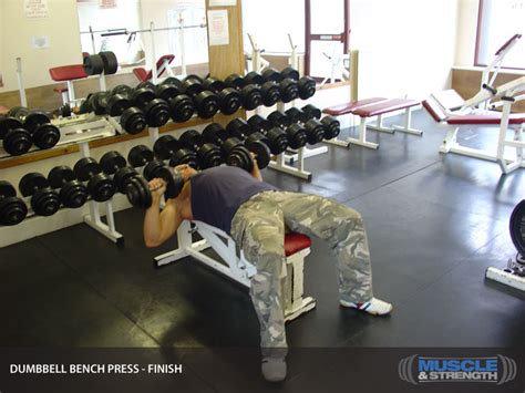 dumbbell bench press calculator 301 moved permanently