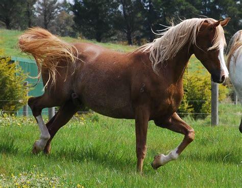 imagenes surrealistas de caballos imagenes de caballos pura sangre quotes