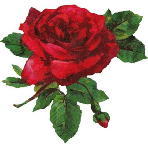 red rosa a graphic red rose graphics clipart best