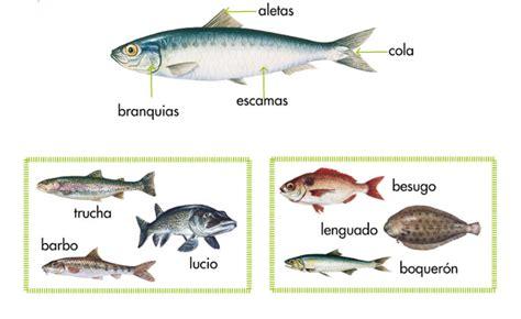 libro los peces de la los peces